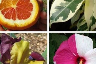 Lý giải sự đột biến tạo nên 'giá trị tiền tỷ' của các loài thực vật