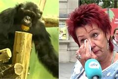 Có tình cảm đặc biệt với tinh tinh, người phụ nữ bị cấm đến vườn thú