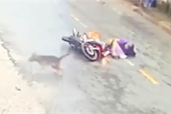 Người đi xe máy ngã ra đường vì đâm phải con chó, thêm chi tiết gây bức xúc