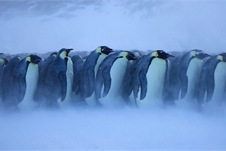 Climate change: Emperor penguin 'needs greater protection'