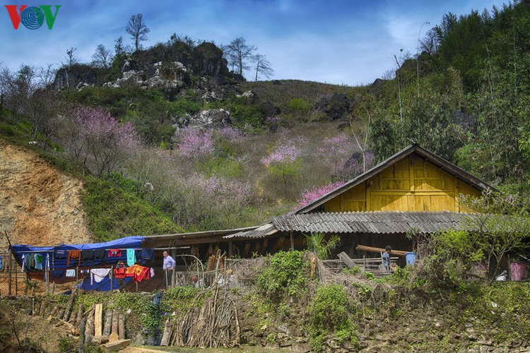 exploring spectacular sight of sapa during spring hinh 5
