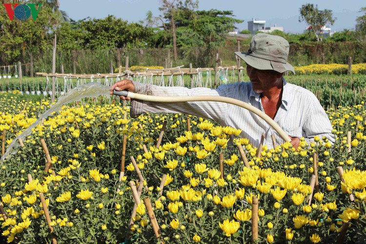 pho tho-ba bo flower village gears up for tet hinh 2