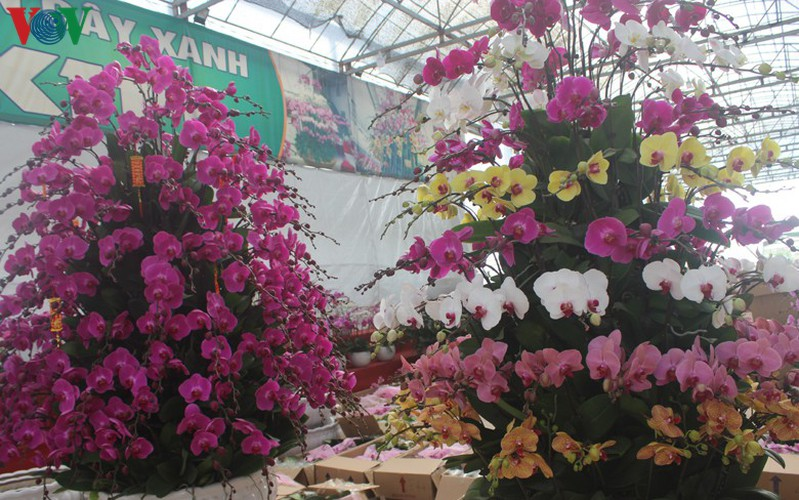expensive orchid pots prove popular among customers ahead of tet hinh 12
