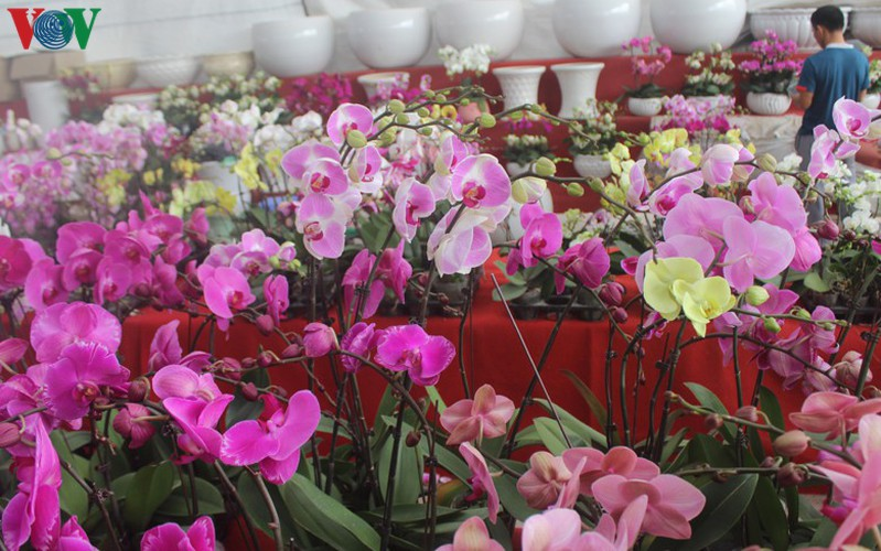 expensive orchid pots prove popular among customers ahead of tet hinh 13