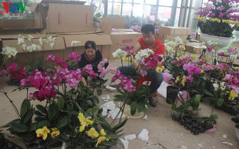 expensive orchid pots prove popular among customers ahead of tet hinh 15