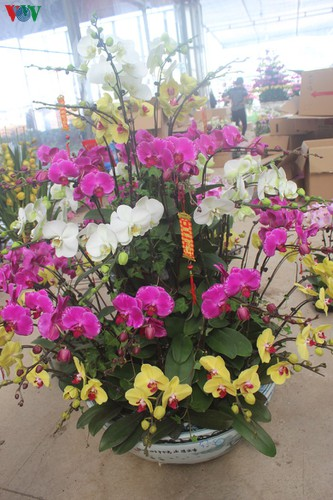 expensive orchid pots prove popular among customers ahead of tet hinh 4
