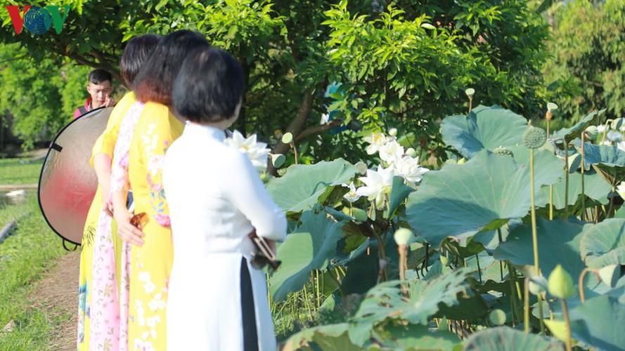 hanoi sees hordes of people flock to white lotus flower pond hinh 4