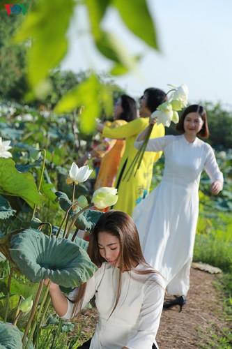 hanoi sees hordes of people flock to white lotus flower pond hinh 7