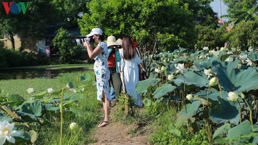 hanoi sees hordes of people flock to white lotus flower pond hinh 8