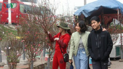 Quang An flower market bustling with trade as Tet looms