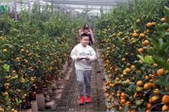 Tu Lien village bustles with trade ahead of Tet
