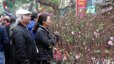 Hang Luoc flower market proves to be a hit among customers ahead of Tet