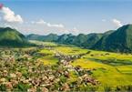 Bac Son rice fields turn yellow amid harvest season