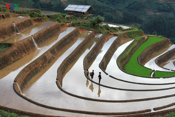 mu cang chai named among world's 50 most beautiful places to visit hinh 3