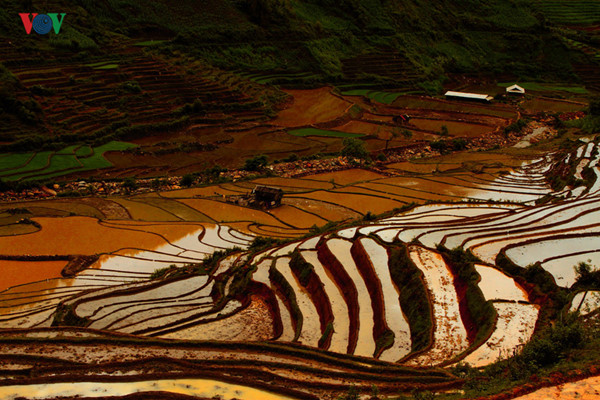 mu cang chai named among world's 50 most beautiful places to visit hinh 6
