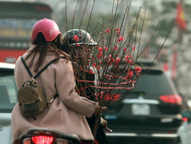 first signs of spring beauty spotted on hanoi streets hinh 10