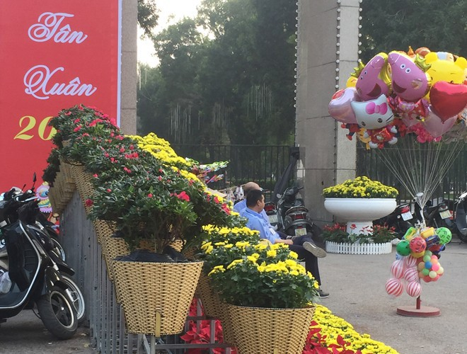 first signs of spring beauty spotted on hanoi streets hinh 5