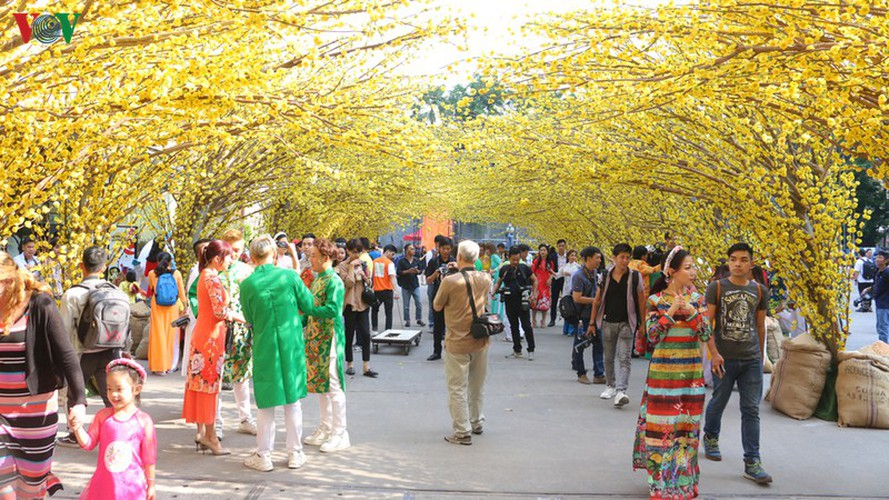 visitors to hcm city in awe of streets covered in apricot blossoms hinh 1
