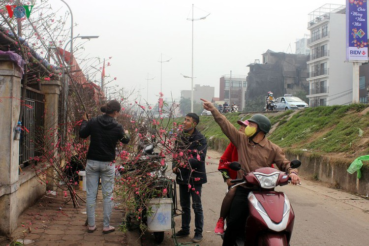 quang an flower market bustling with trade as tet looms hinh 10