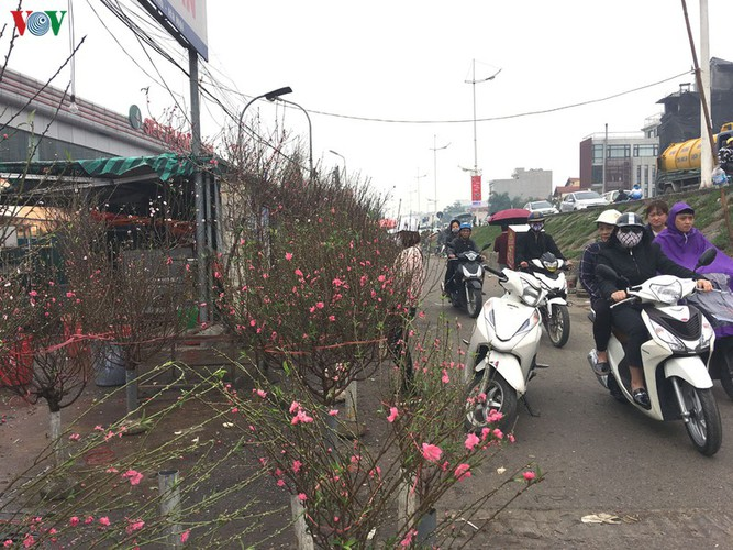 quang an flower market bustling with trade as tet looms hinh 3