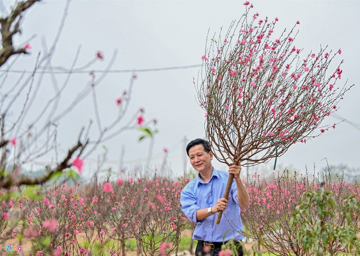 a view of the spectacular peach blossoms in nhat tan flower village hinh 8