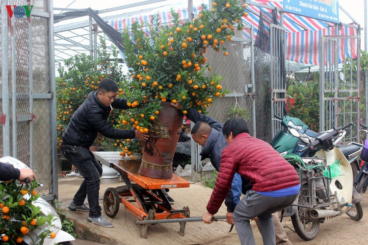 tu lien village bustles with trade ahead of tet hinh 13