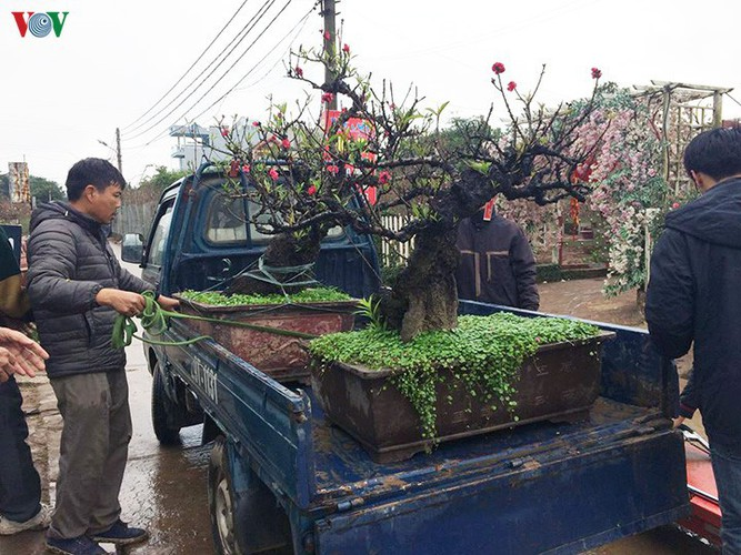 tu lien village bustles with trade ahead of tet hinh 17
