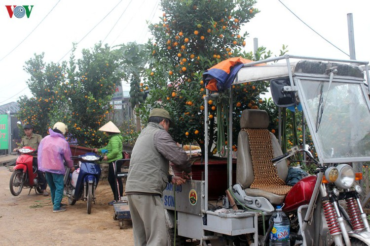 tu lien village bustles with trade ahead of tet hinh 3