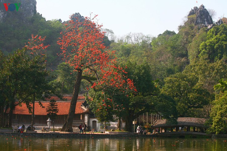 stunning red silk cotton trees spotted around old pagoda hinh 1
