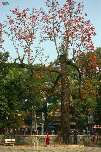 stunning red silk cotton trees spotted around old pagoda hinh 6