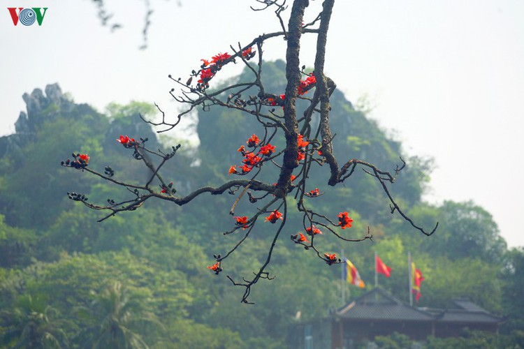 stunning red silk cotton trees spotted around old pagoda hinh 8