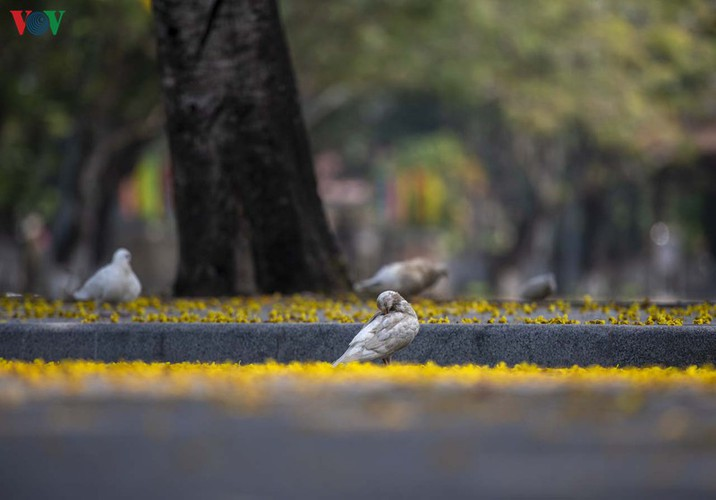 april sees flowers bloom throughout the streets of hue hinh 5