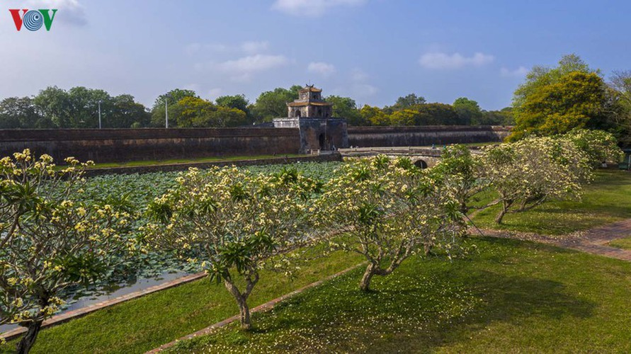 april sees flowers bloom throughout the streets of hue hinh 6