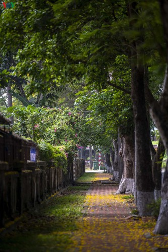 april sees flowers bloom throughout the streets of hue hinh 8