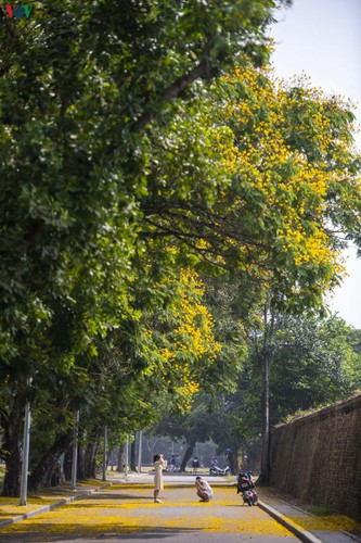april sees flowers bloom throughout the streets of hue hinh 9