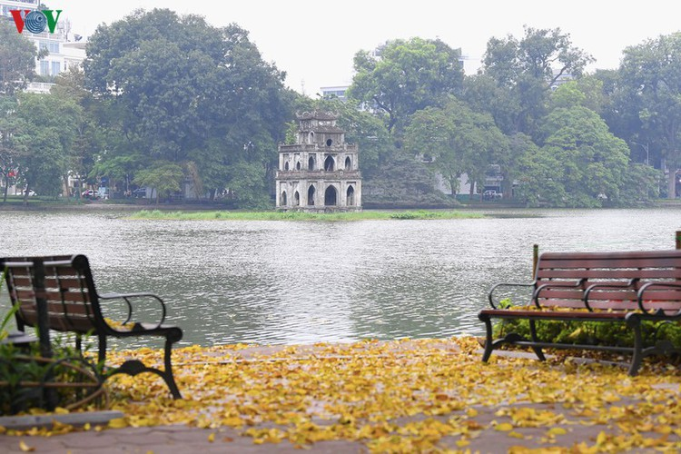 summer looms as hanoi streets are covered in falling yellow leaves hinh 11