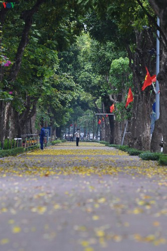 summer looms as hanoi streets are covered in falling yellow leaves hinh 13