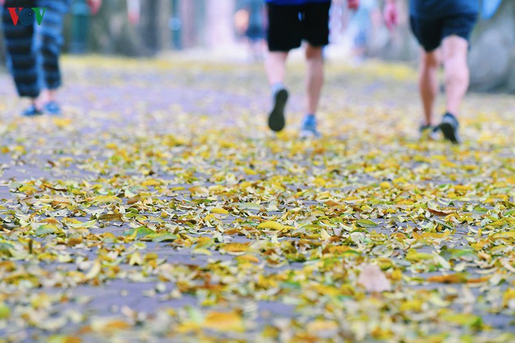 summer looms as hanoi streets are covered in falling yellow leaves hinh 18