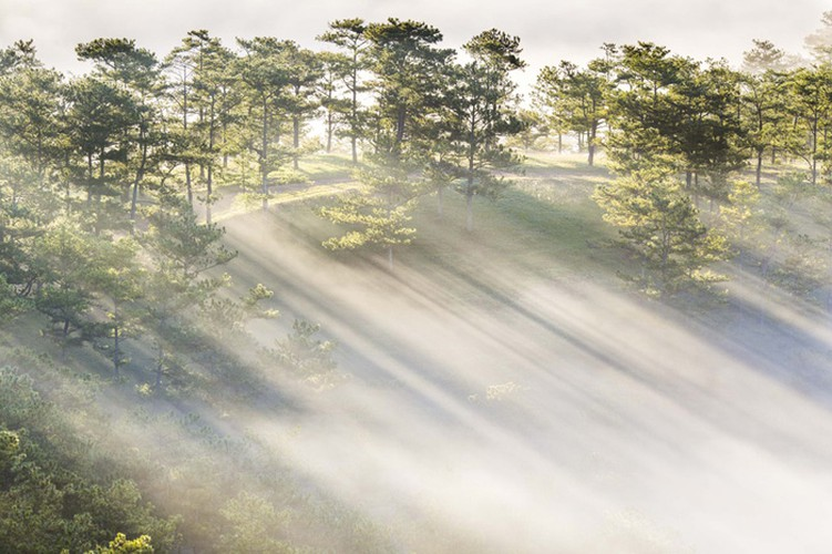 romantic da lat hidden in magnificent morning clouds hinh 11