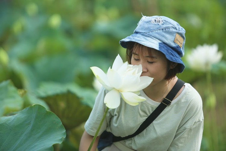 charming white lotus flowers spotted in bloom on outskirts of hanoi hinh 3