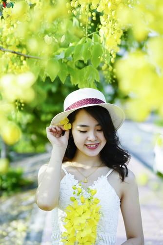 beautiful golden shower trees brighten up dien bien province hinh 10