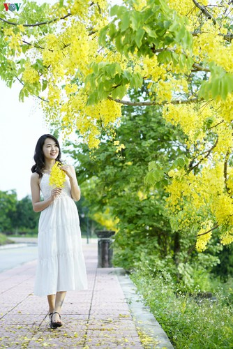 beautiful golden shower trees brighten up dien bien province hinh 9