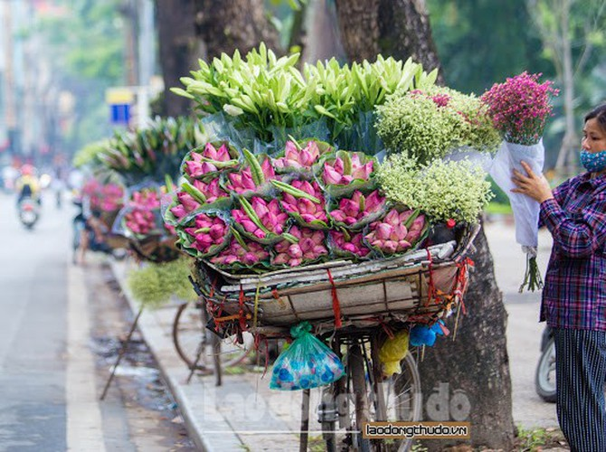 streets around hanoi enjoy sight of blossoming lotus flowers hinh 1