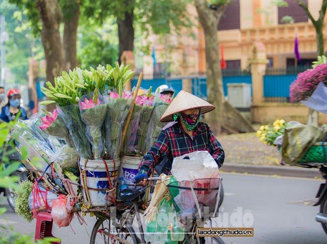 streets around hanoi enjoy sight of blossoming lotus flowers hinh 2