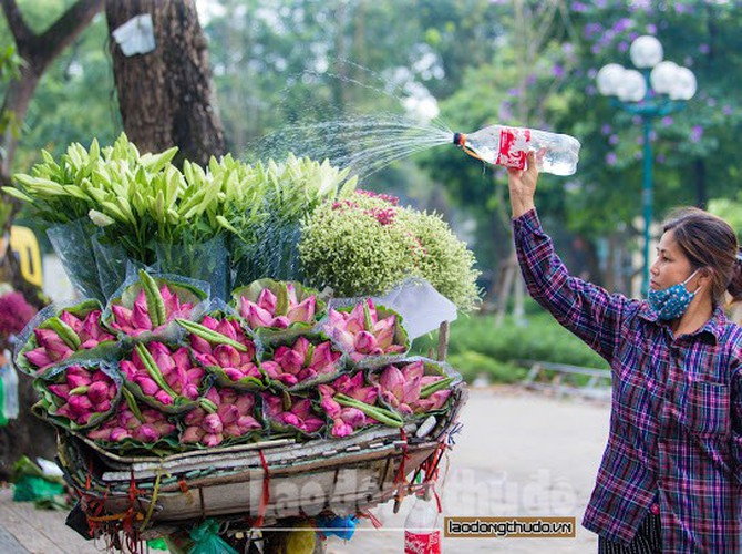 streets around hanoi enjoy sight of blossoming lotus flowers hinh 7