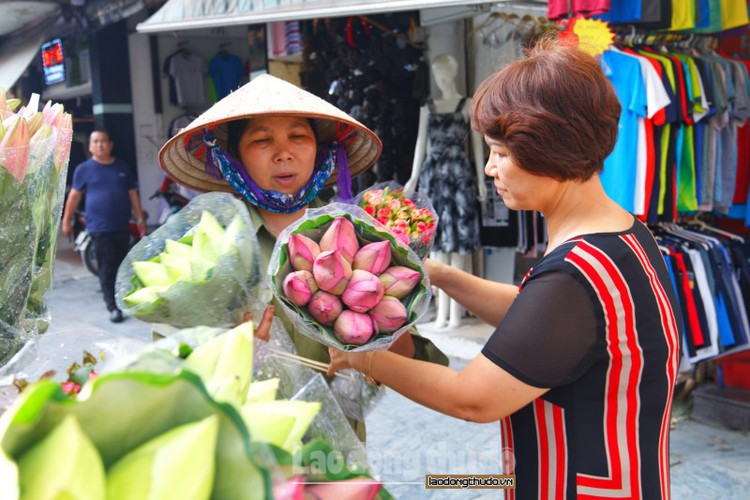 streets around hanoi enjoy sight of blossoming lotus flowers hinh 9