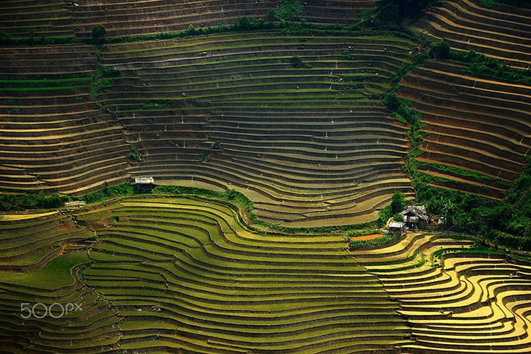 vietnam's beauty revealed through the lens of foreign photographers hinh 4