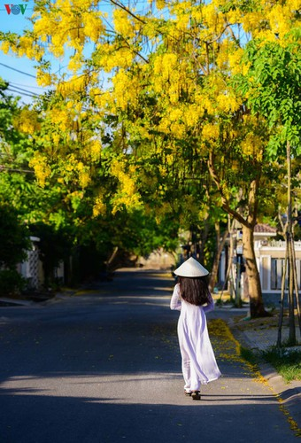 summer transforms hue into city of colourful charming flowers hinh 5