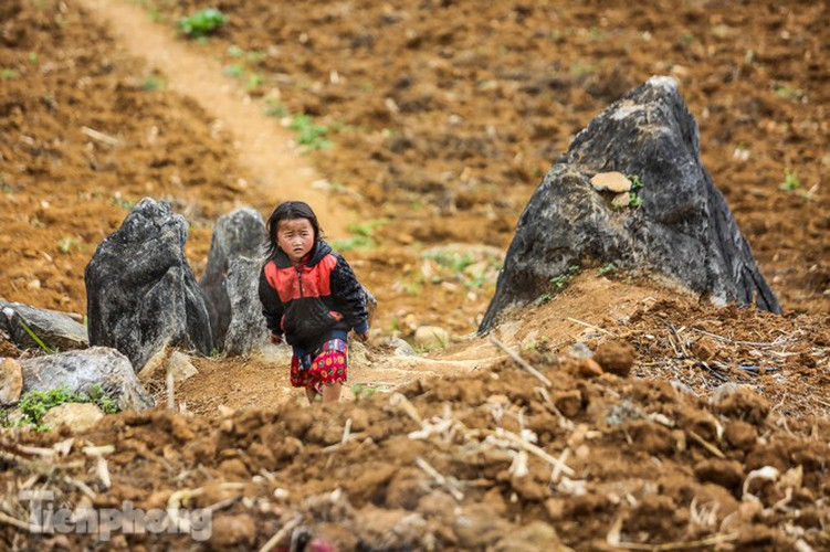 images of playful children on stone plateau in ha giang hinh 11