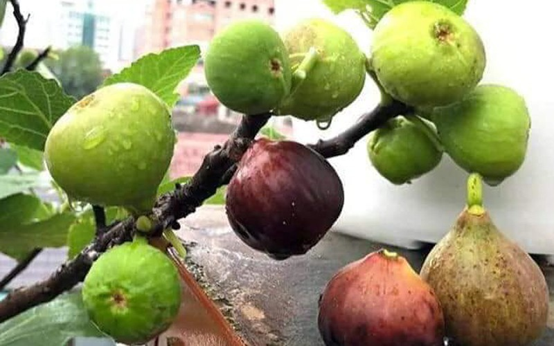 production of new types of fruit helps farmers earn additional income hinh 15